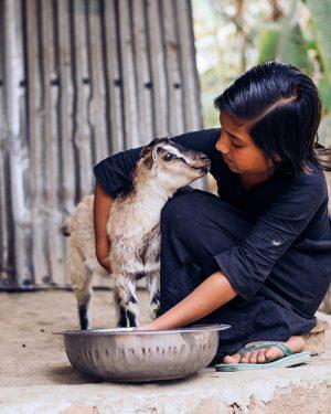 geit compassioncadeaus